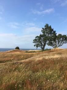 gill tree