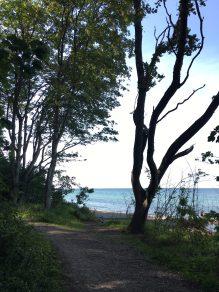 hornbaek tree
