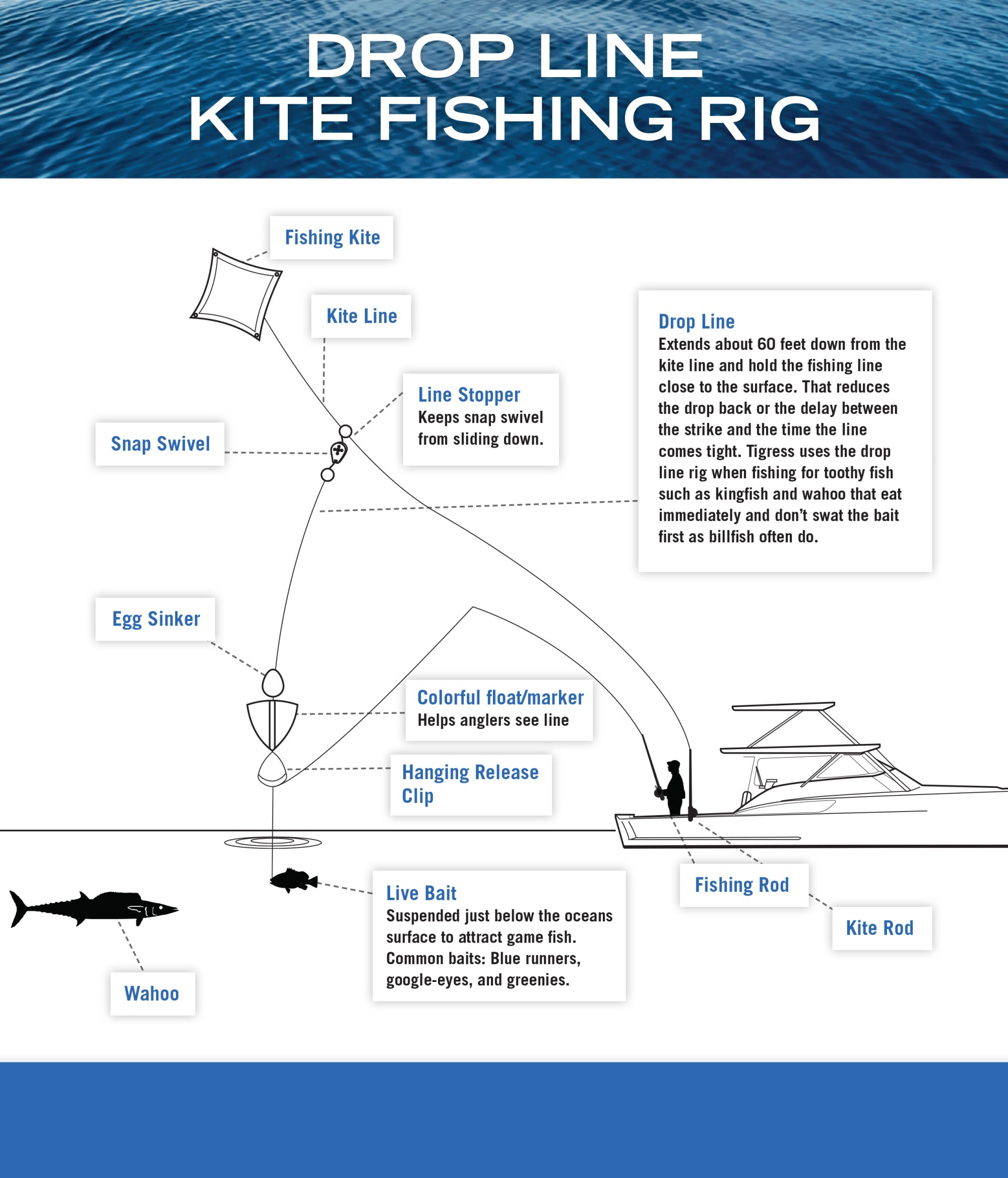 hight resolution of drop line kite fishing instructions