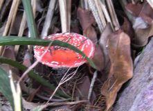 Mushroom - Pic3