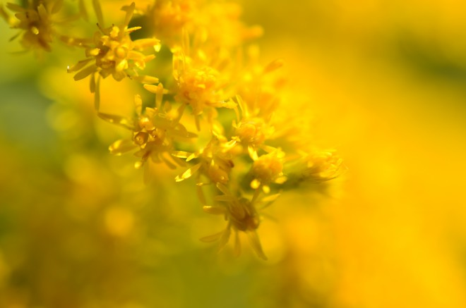 Yellow Macro Flower