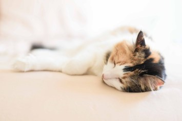 Calico-Cat-Photographer-Minnesota-2030