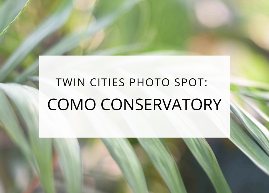Twin Cities Photo Spot: Como Conservatory