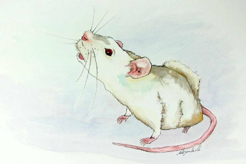 Watercolour illustration of a white rat named Lola