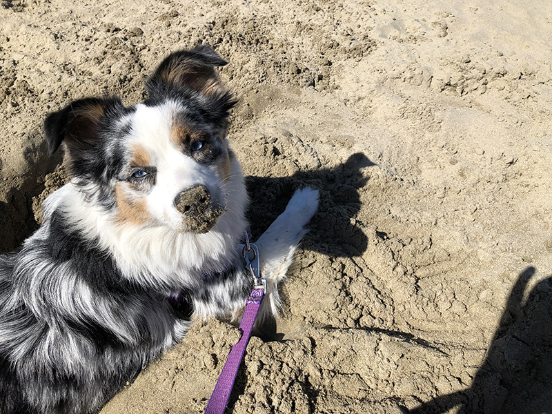 Lily loving the sand