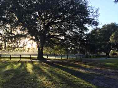 big-tree-fence-backlit2