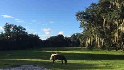 horses-graze-shady-pasture