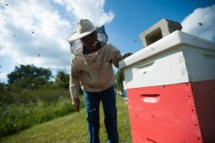 Jay Kirkman watches as bees fly around one of his hives. 10kyind01E