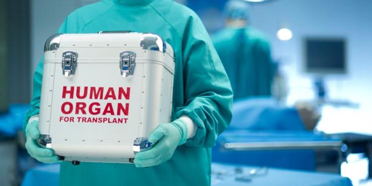 Human_Organ.jpg