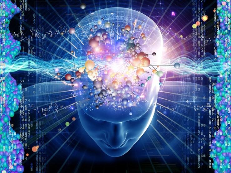 Brain 3