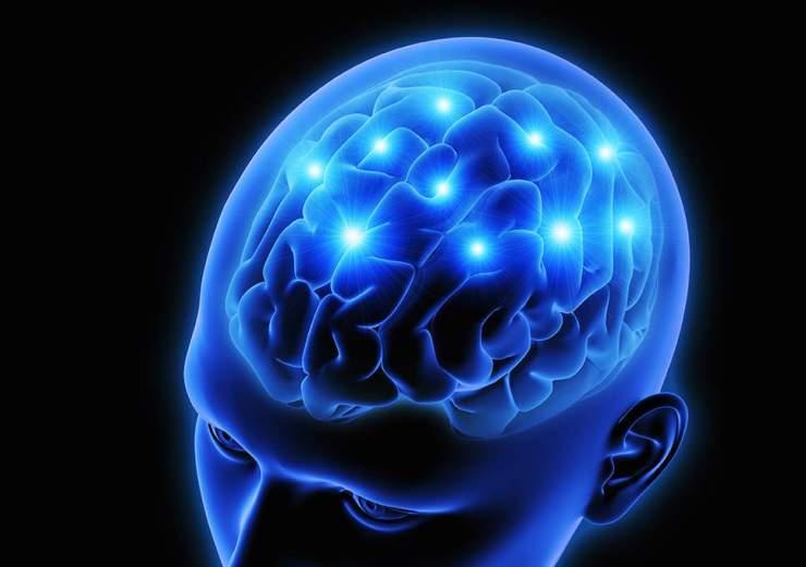 Brain Protein.jpg