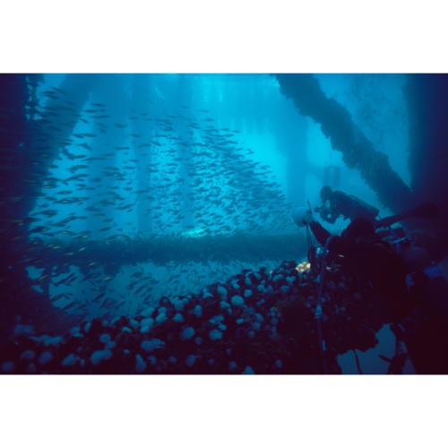 Filming Schooling Fish, Platform Hope (Decommissioned), 45 feet