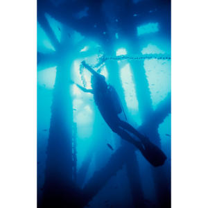 Underwater dancing with salp chain diving below Platform Holly