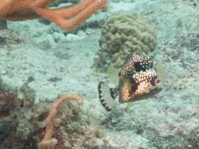 Aruba Photo Safari