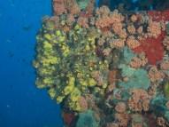 Jane C Wreck, Oranjestad, Aruba, © 2016 Bob Hahn, OLYMPUS M.12-40mm F2.8 at 27 mm, ISO: ISO 400 Exposure: 1/80@f/7.1