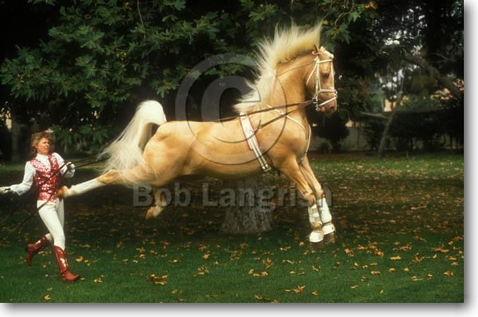 Cute Equestrian Wallpapers Bob Langrish Equestrian Photographer Images