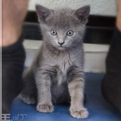 pisici_mici_04