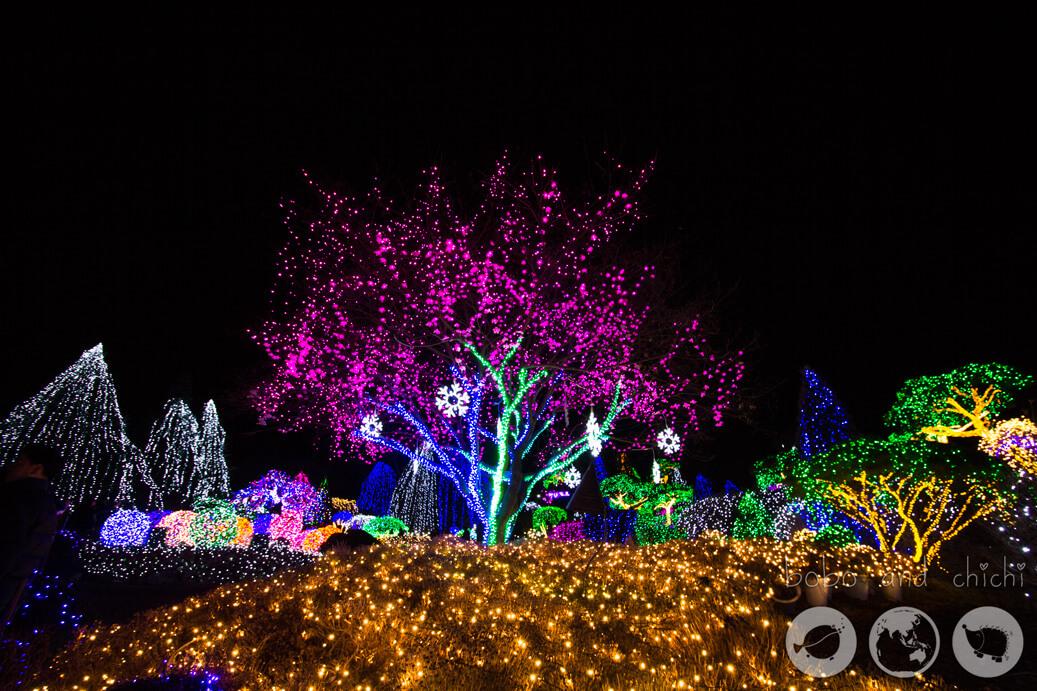 Cheongpyeong Lighting Festival Seoul Tree at night
