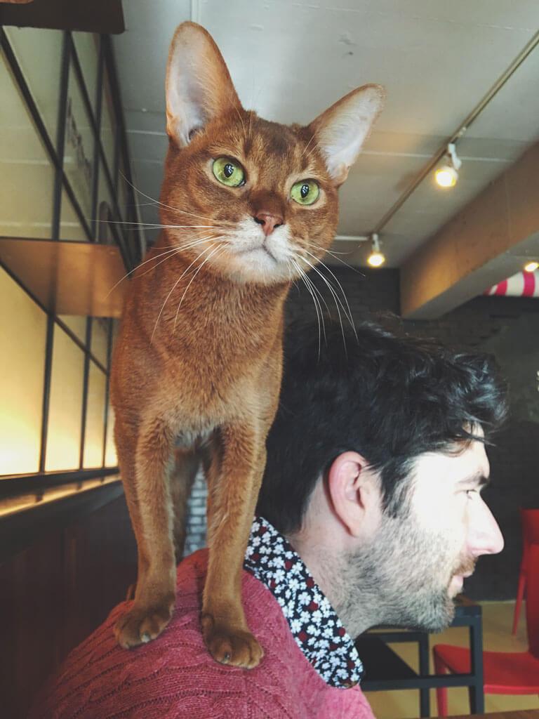 Korea Cat Cafe