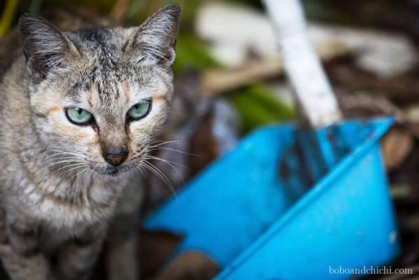 Garbage-kitty