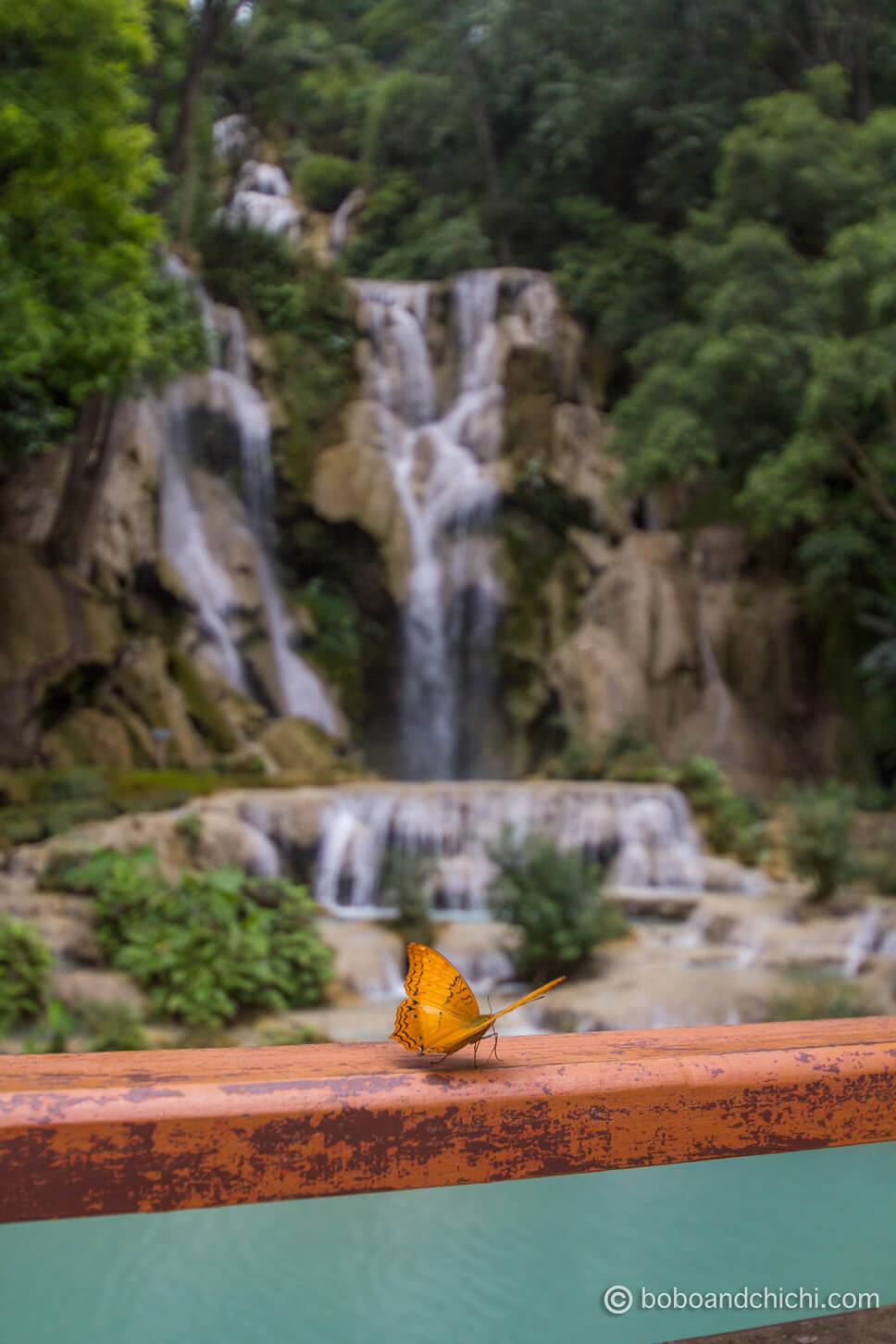 Butterfly Rests at KuangSi Waterfall