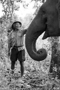 Mahut-with-Elephant-copy