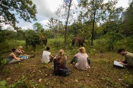 Observing-Elephants