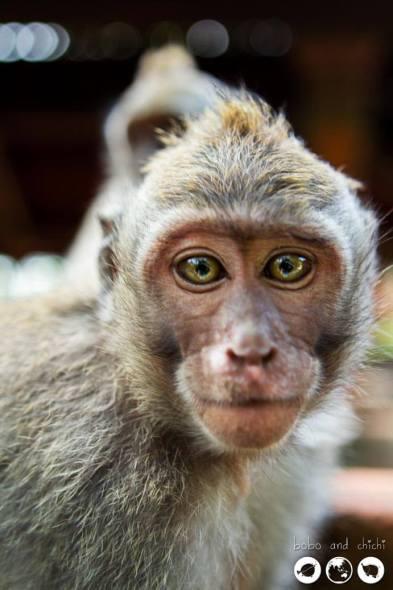 Photogenic Monkeys