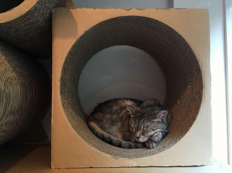 sleeping-cat-at-japan-cat-cafe