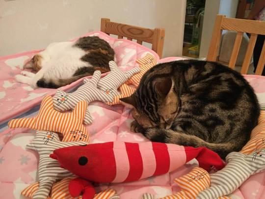 sleeping-babies-at-japan-cat-cafe