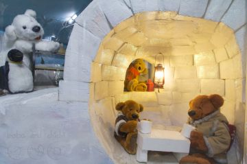Teddy-Bear-in-Igloo