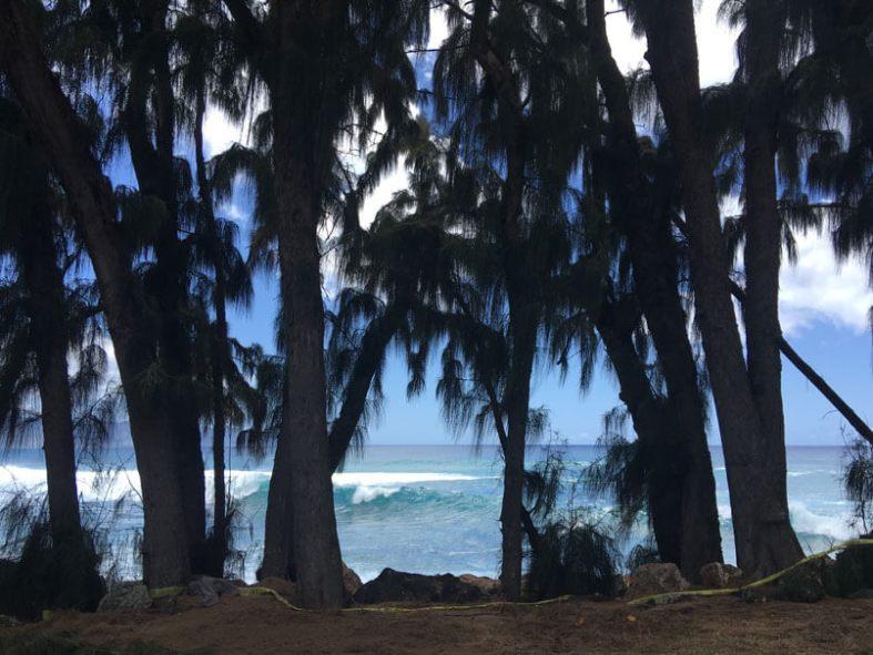 Sharks Cove Oahu