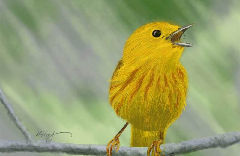 Is the canary calling?