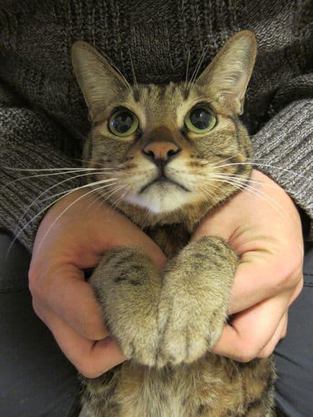 【分享】波波日記。貓咪巨結腸症的日常照顧與飲食~