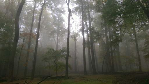 There's a debt collector hiding in the woods out there.  But no debt. (Bob Sullivan)