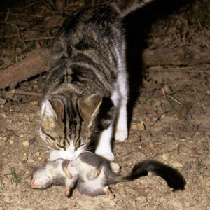 Feral cat fredy mercay
