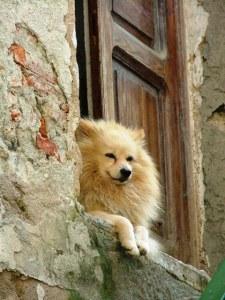 dog-dogging-footsteps
