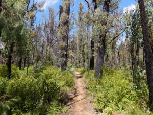 native-forests-bushfires