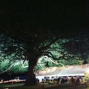 music-festivals-grand-finals
