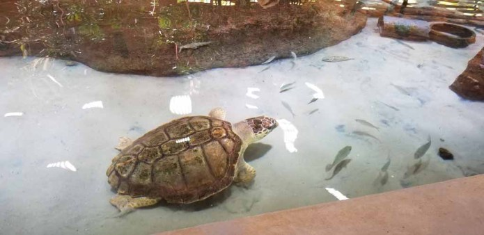 For Our Future Generations: Gumbo Limbo Revamp for Boca