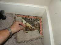 How To Tell If Mold Under Carpet | Carpet Menzilperde.Net