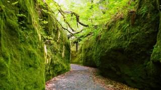 支笏湖 苔の回廊