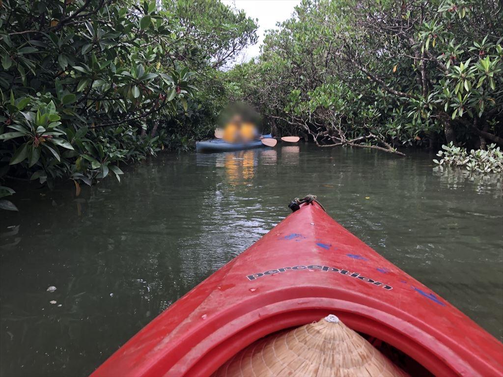 マングローブカヌー体験ツアー