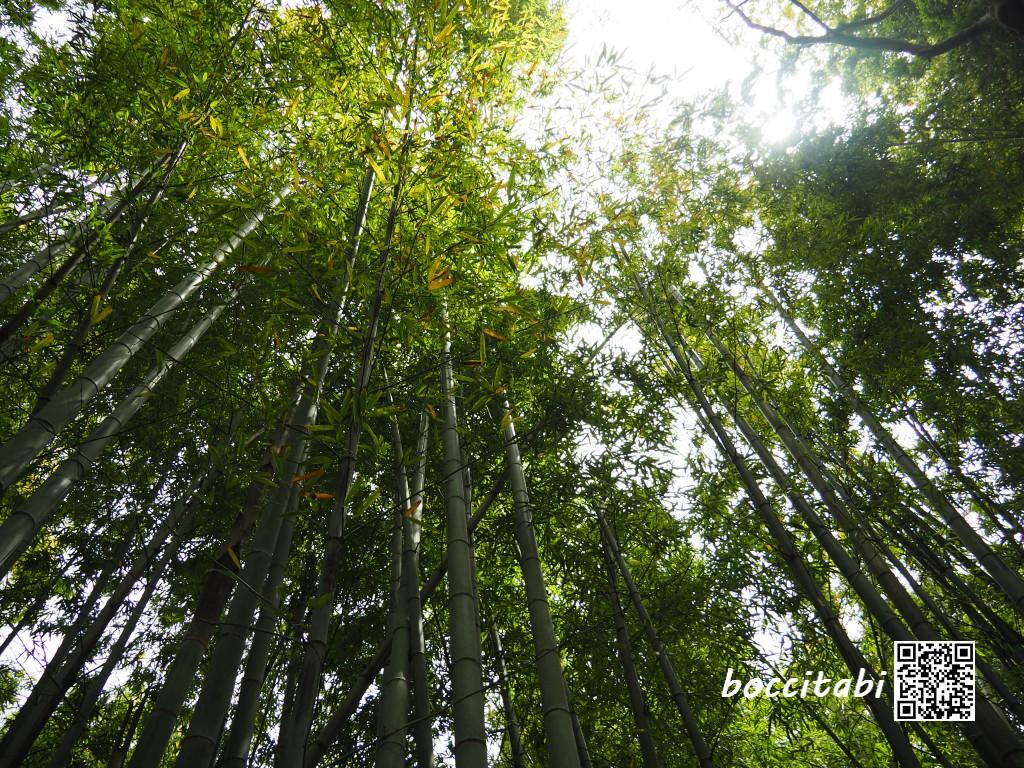 天園休憩所竹林