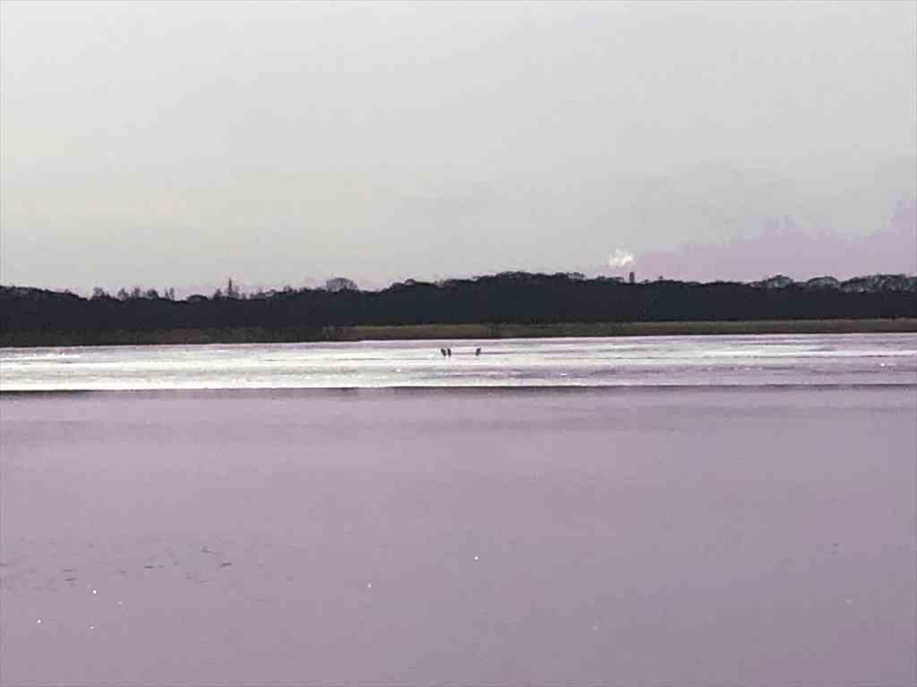 ラムサール条約登録湿地ウトナイ湖 遠くに野鳥