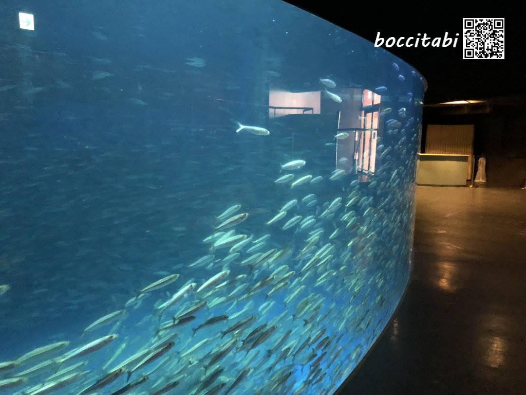 登別マリンパークニクス ニクス城水族館 イワシの大水槽