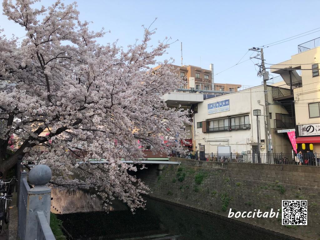 横浜大岡川プロムナード桜並木