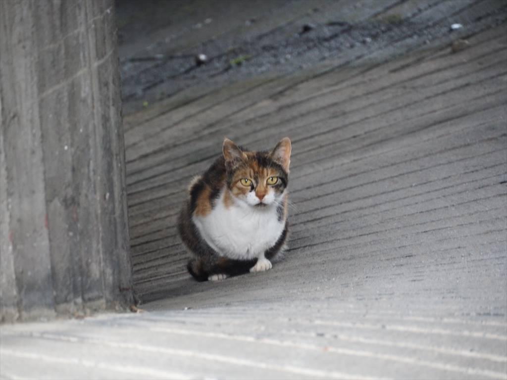 伊豆山神社 走り湯 猫