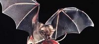 Fruit-Bat Sex Lecturer Wins Case Against Punishment