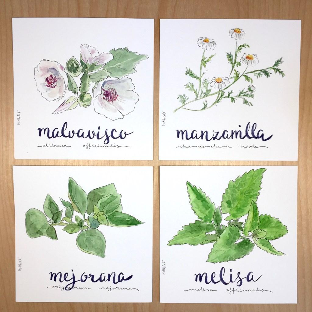 La boda de las plantas medicinales bodas dibujadas for Plantas decorativas con sus nombres